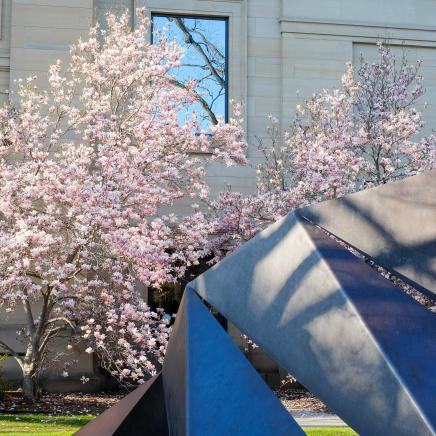 trees in bloom and sculture